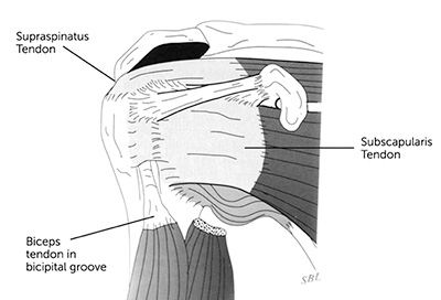 stacks-image-aecda77 Shoulder Muscles Diagram on impingement syndrome, shoulder muscles and ligaments, shoulder blade, shoulder muscle deterioration, arm diagram, frozen shoulder, slap tear, front shoulder diagram, shoulder anatomical diagram, glenohumeral joint, shoulder muscle exercises, shoulder ligaments diagram, rotator cuff, acromioclavicular joint, shoulder subluxation, rotator cuff tear, dislocated shoulder, shoulder movements, upper limb, shoulder tendons, shoulder pain, shoulder rotator cuff muscles, trapezius muscle diagram, glenoid cavity, shoulder labrum diagram, shoulder joint, shoulder bones, separated shoulder, shoulder anatomy, shoulder problems, shoulder girdle muscles, knee diagram,